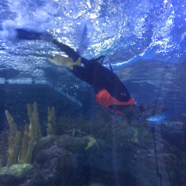 Snorkeling at the Aquarium