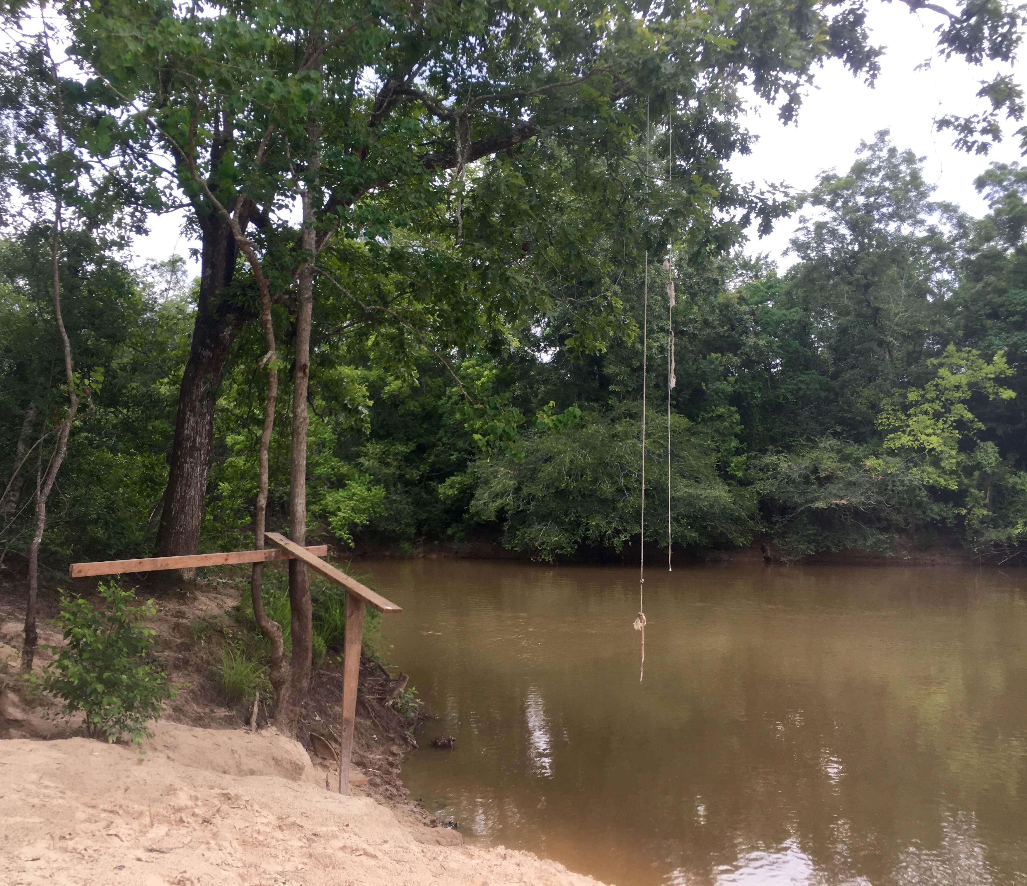 A rope swing on the bank of Porters River.