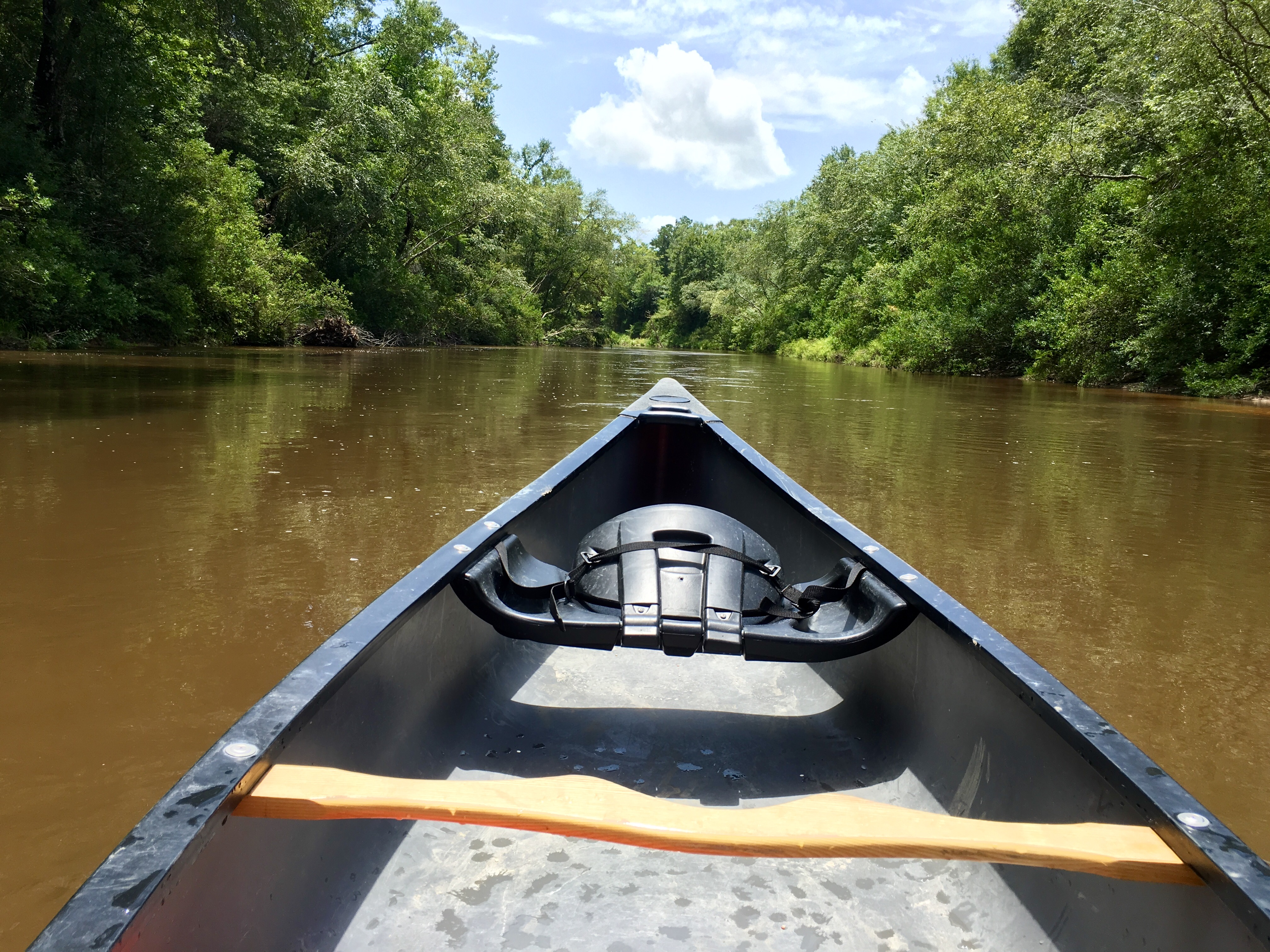View from a canoe on the Wolf River.