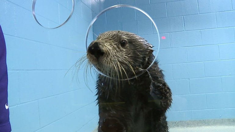 Sea Otter Behind the Scenes