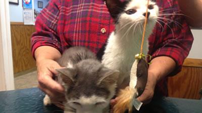 kittens400