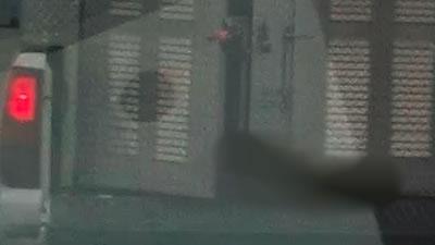 dog_blurred400