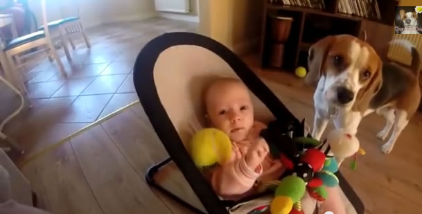beagle-and-baby