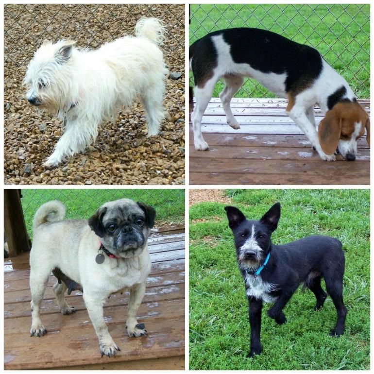 Photos: Friends of Huntsville Animal Services/Facebook