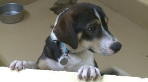 Huntsville Animal Services  achieved a record live release rate for the month of October. (Christine Killimayer, WHNT News 19)