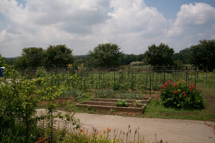 CASA's Community Garden is run by volunteers. Image: casamadisoncty.org