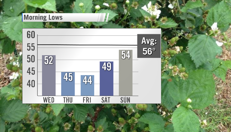 PM Lows Temperature Trend with Photo