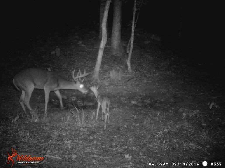 A buck and fawn tentatively check each other out on private property in Madison County.