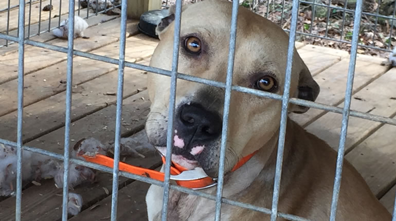 One of the dogs seized from the abandoned home in Washington County, AL (Photo: WKRG)