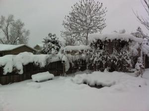 Ft. Collins CO snow