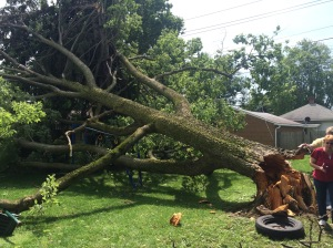 This downed tree left several residents in the Speedway area without power Monday afternoon