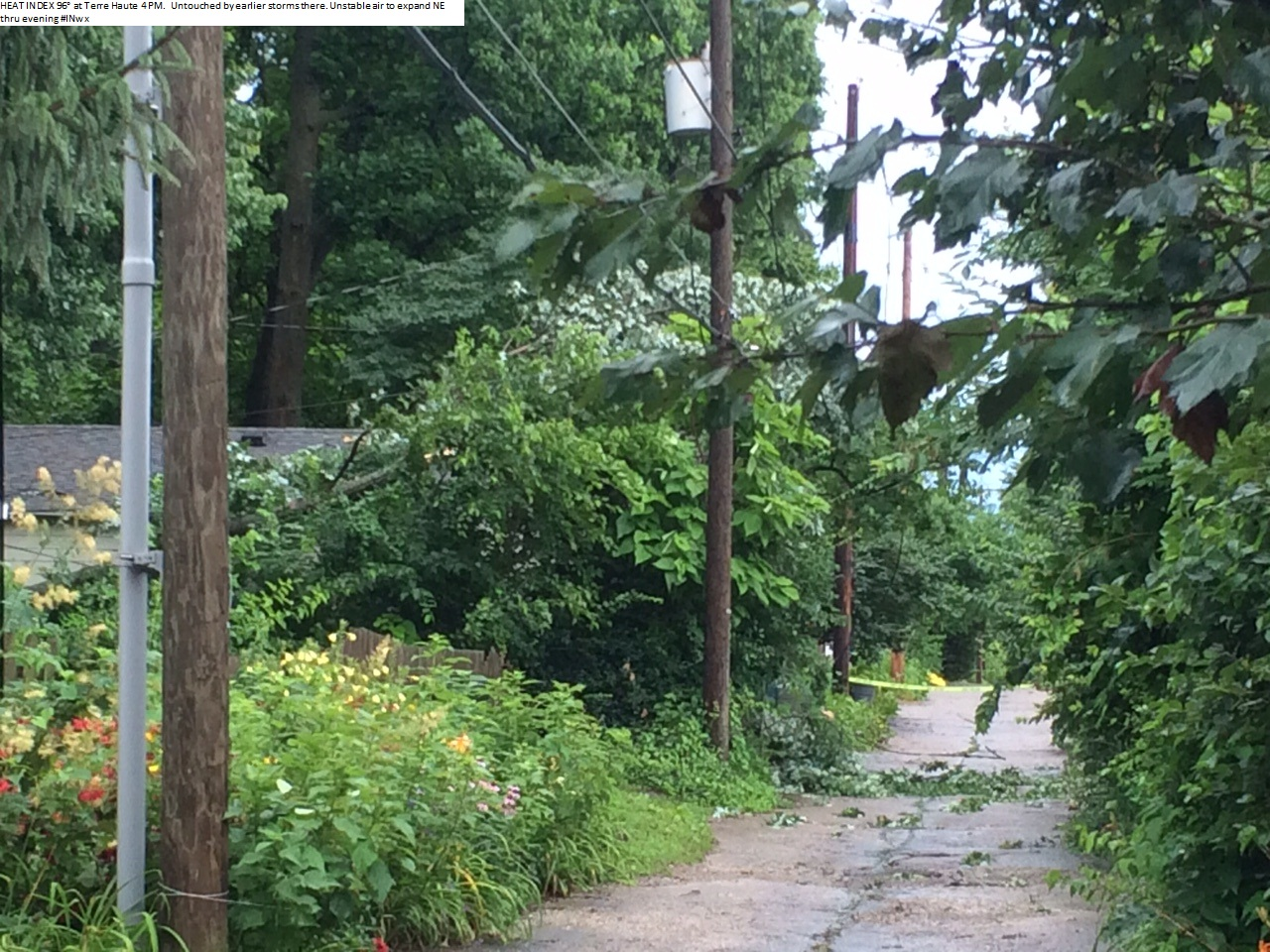 Trees toppled near park ave July 13th