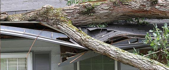 Paul Daivs Storm Damage