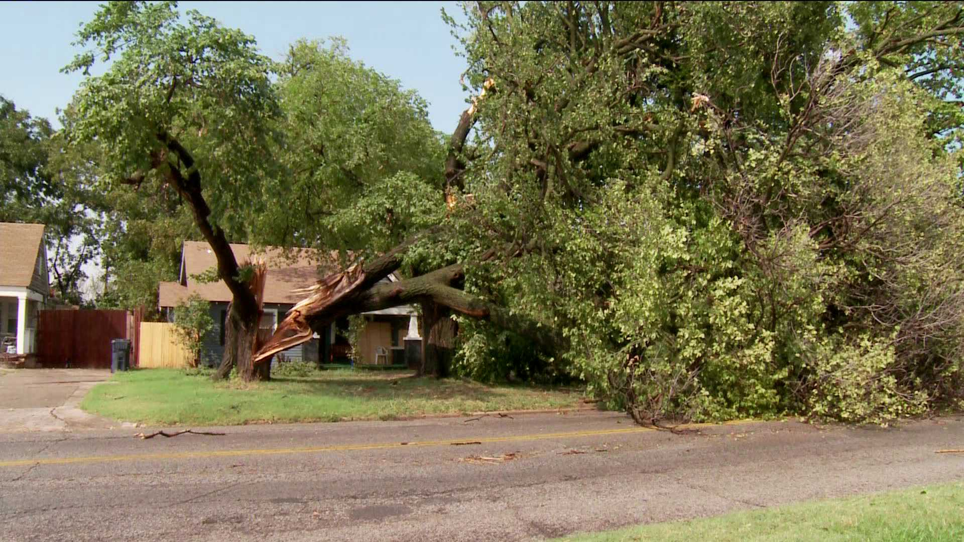 Winds take down trees - S.W. 24th St. and Shartel