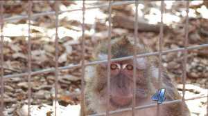 Monkey cage eyes