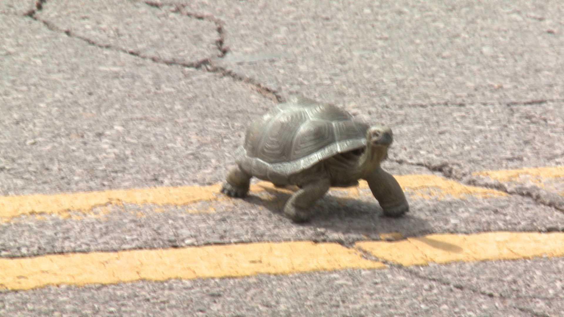 Turtle Test fake turtle smile
