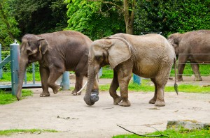 Photo: Ryan Hawk/Woodland Park Zoo