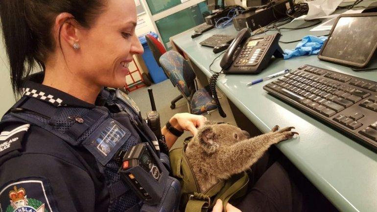 Koala Found Woman Bag