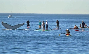 whales-pic