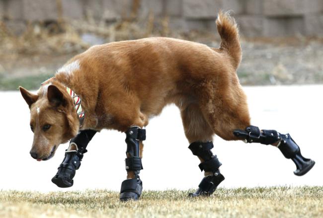 bionicdog