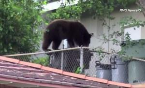 bear-arcadia-pic