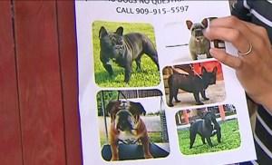 stolen-dogs