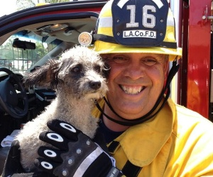 dog-rescued-industry-fire
