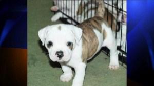 Stolen Puppies Highland Park