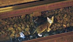 subway-kittens