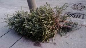 christmas-tree-filephoto