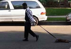 man-drags-puppy