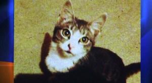 kitty-shot-by-arrow