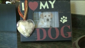 toby-cremated-dog-heart