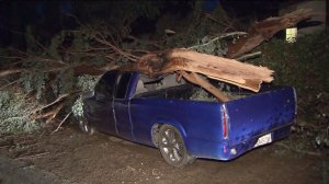 A tree fell on a truck after wild weather hit the Inland Empire on Sept. 16, 2014. (Credit: KTLA)