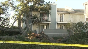 A tree fell in Duarte in the early morning hours of Oct. 8, 2014, damaging multiple apartment units and displacing several residents. (Credit: KTLA)