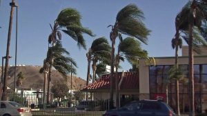 Palm trees are hit by high winds in a file photo. (Credit: KTLA)