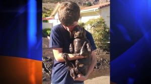 A neighbor provided this photo of Henry Needham's grandson holding a muddy Tinkerbell after the dachshund was rescued on Sunday.