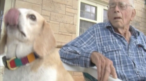 Buddy the Beagle jumped on a Texas ambulance transporting his owner John Rector Nickleson to the hospital in October. (Credit: KLST)