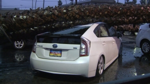 One Prius may have been totaled by a fallen tree at a Toyota dealership in Hollywood on Dec. 12, 2014. (Credit: KTLA)