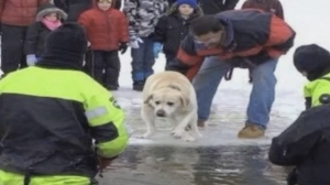 "A dog, named Lincoln, is seen at a ""Polar Plunge"" fundraiser in Massachusetts before being nudged into the icy water on Feb. 14, 2014. (Credit: CNN)"