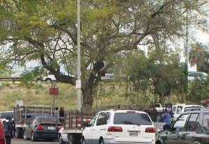 The victim fell about 20 feet from the tree pictured onto the fence below. (Credit: KTLA)
