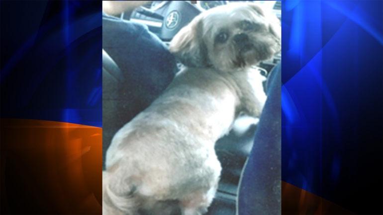 """Los Angeles police have released this picture of """"Maximus,"""" the missing companion dog."""