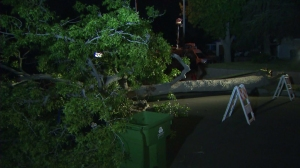 Winds toppled a tree in Lake View Terrace on Wednesday, April 15, 2015. (Credit: KTLA)
