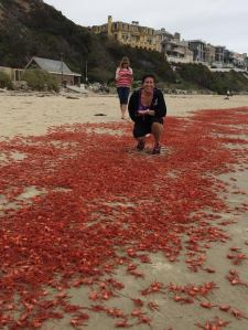 Donna Kalez of Dana Wharf Sportfishing & Whale Watching provided this photo of herself standing amid thousands of red crabs at Strands Beach in Dana Point on June 14, 2015.
