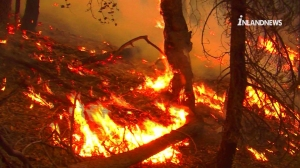 The Lake Fire broke out in the San Bernardino National Forest on June 17, 2015. (Credit: InlandNews)