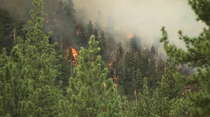 Trees are seen burning as a result of the Lake Fire in the San Bernardino National Forest on Thursday, June 18, 2015. (Credit: KTLA)