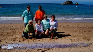 An oarfish was found June 1, 2015, on the western end of Catalina Island. (Credit: Mountain and Sea Educational Adventures)