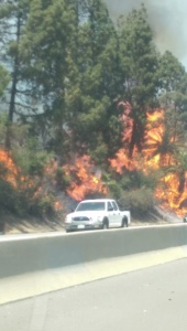 A KTLA viewer captured this image of trees burning before the blaze spread to a Glassell Park church on July 7, 2015. (Credit: John Bandek)