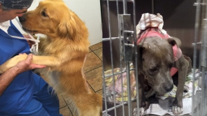 Two photographs show Fergus (left) and Bella (right) -- two dogs who survived severe chemical burns. (Credit: KTLA)