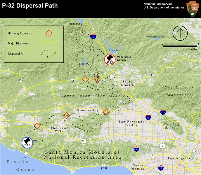 A National Park Service map shows P-32's path from his dispersal in April 2015 to his death on Aug. 10, 2015.